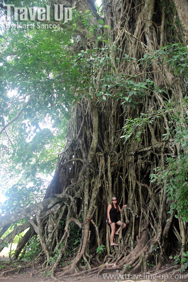 Balete Tree in Maria Aurora – Travel Up