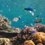 Isla Culion: Crowning Glory Reef & Lusong Shipwreck
