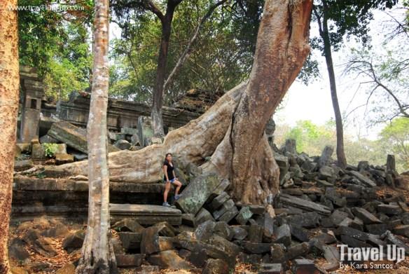 beng melea temple cambodia tree