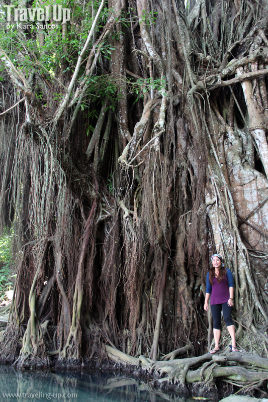 siquijor enchanted balete tree travelup