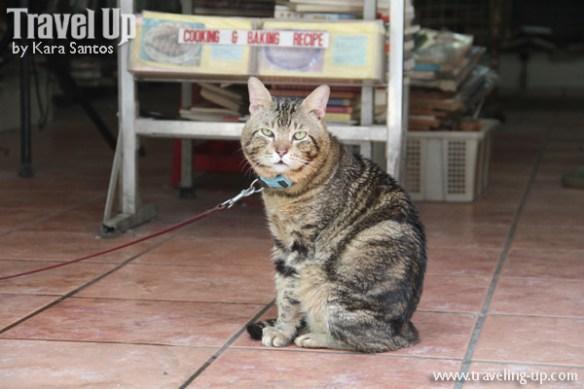 binondo chinatown cute cat