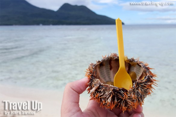 camiguin uni sea urchin white island