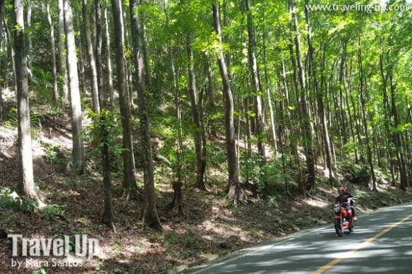 mabuhay motorcycle tours bohol manmade forest
