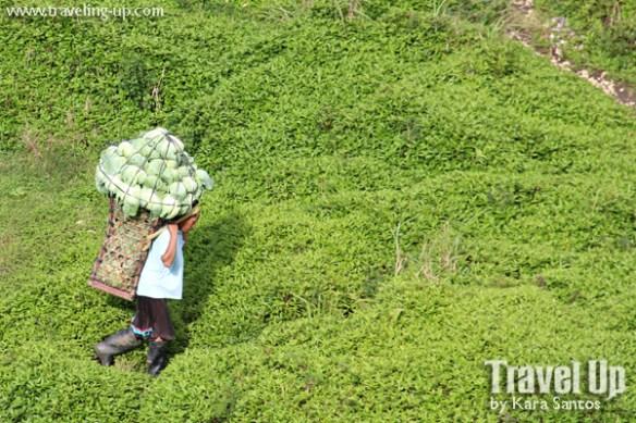osmena peak dalaguete cebu cabbage man