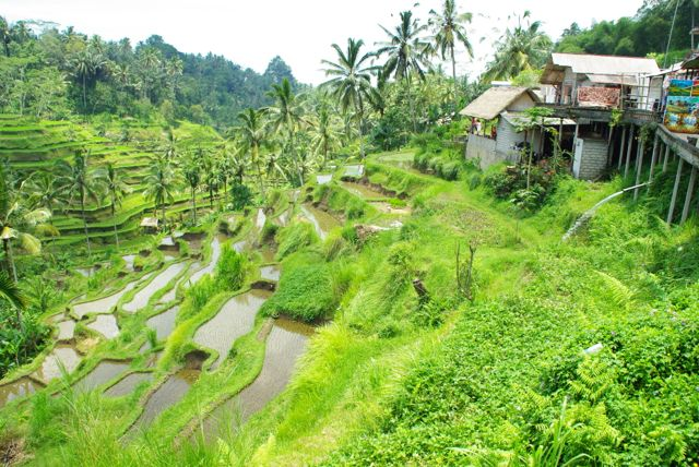 Day Trip from Ubud on Motorbike