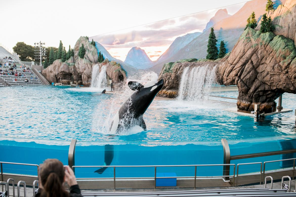 8 Tips For Visiting Sea World