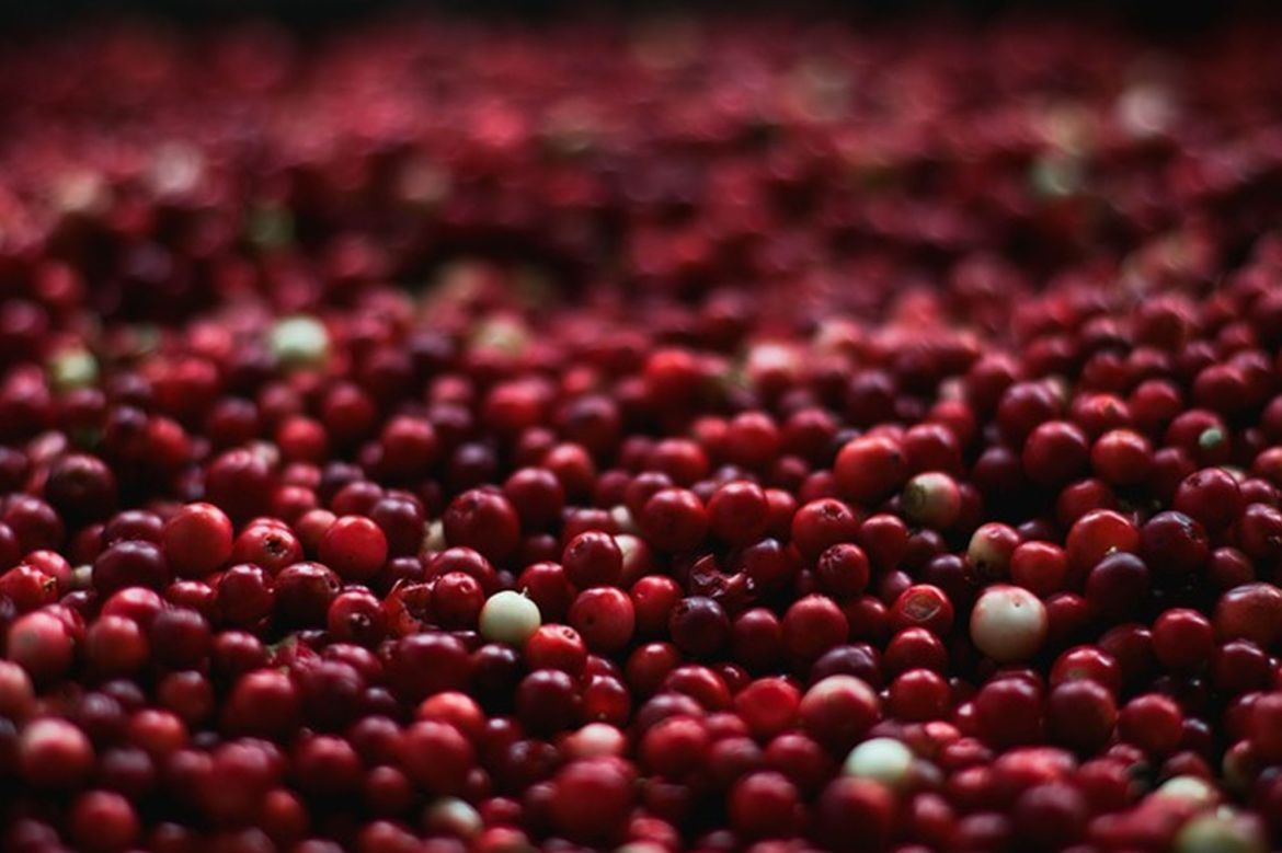 Check out Wisconsin's Cranberry Marsh Tours