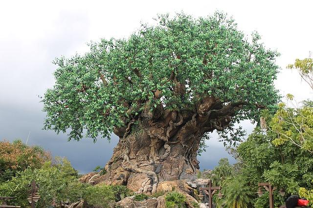 Things to Do at Animal Kingdom tree of life