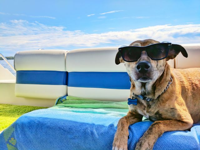 Dog Friendly Vacations in the Midwest dog with sunglasses on
