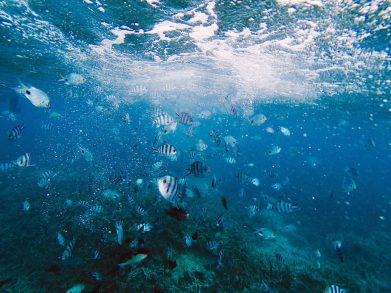 Roatan Private Charter, Roatan private snorkelling, Roatan Snorkelling, Traveling Islanders, Roatan Snorkeling, Roatan Catamaran Tour, Roatan cruise excursion, Amavi Charters