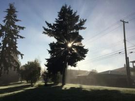 morning-fog6