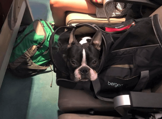 delta airlines dog policy