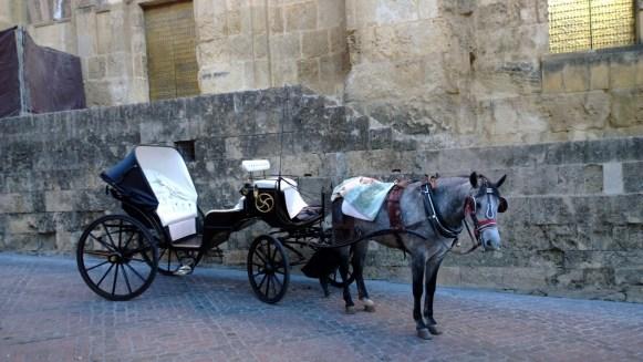 Pferdekutsche in Cordoba