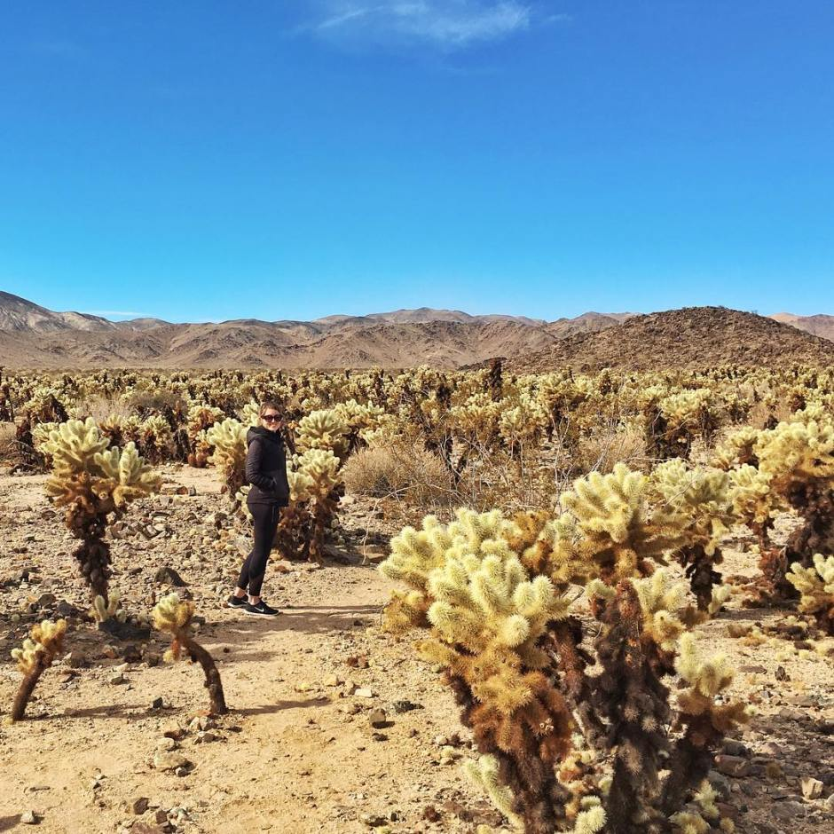 8 Things to Do in Joshua Tree National Park | Traveling Spud