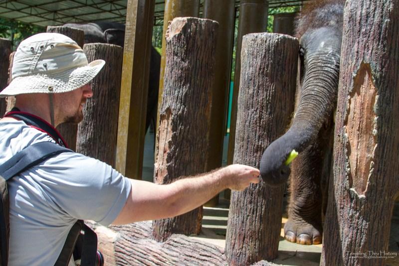Kuala Gandah Elephant Sanctuary_23t