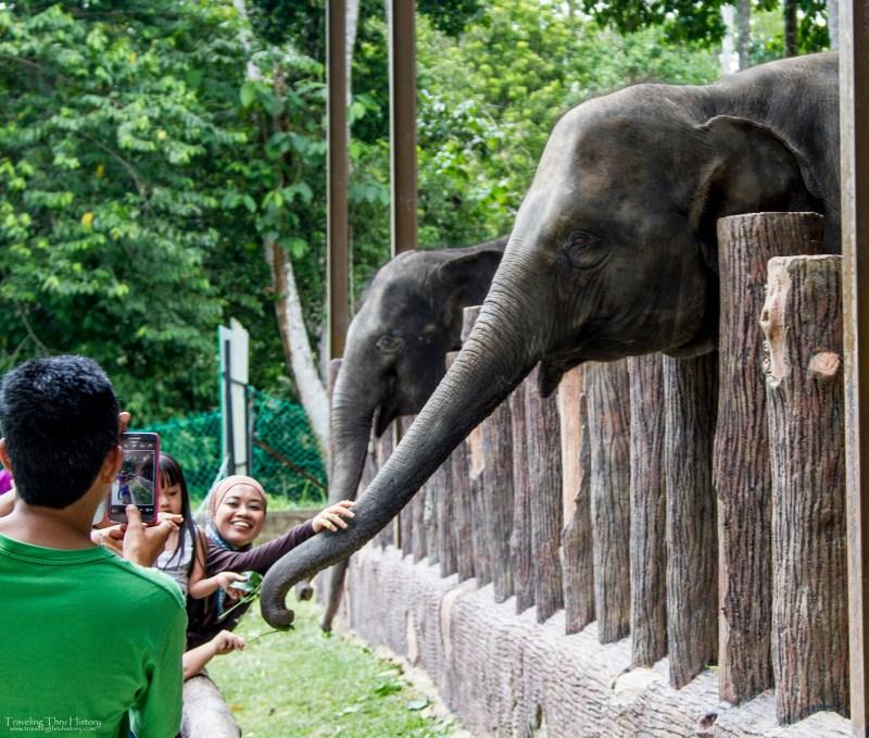 Kuala Gandah Elephant Sanctuary_27t