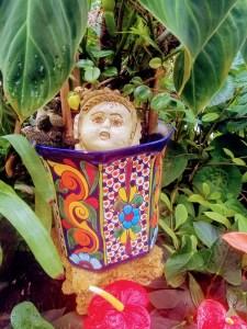 Botanical Gardens in Puerto Vallarta
