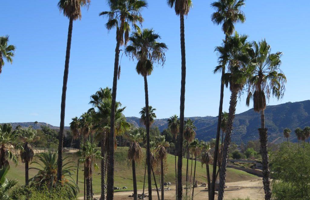 San Diego Zoo Safari Park a Must-Visit (Miles Geek)
