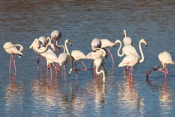 Coto de Donana wildlife site e1554751368531 - Seville Tourist Guide   Best Places To Visit in Seville, Spain