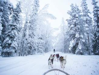 explore Rovaniemi in winter
