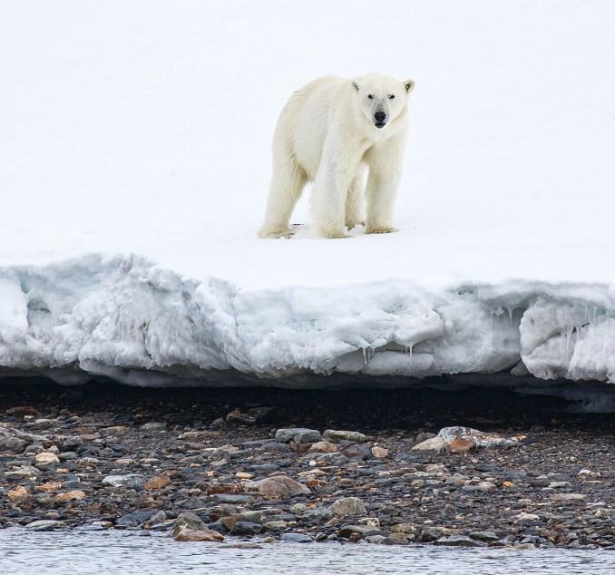 activities to do in Svalbard
