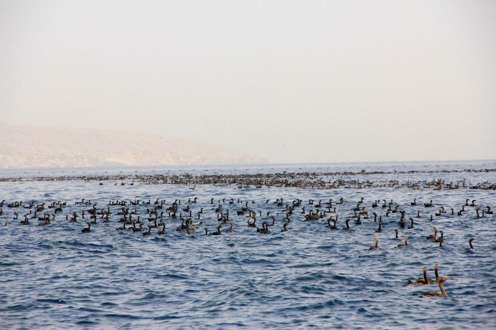 Heaps of Birds