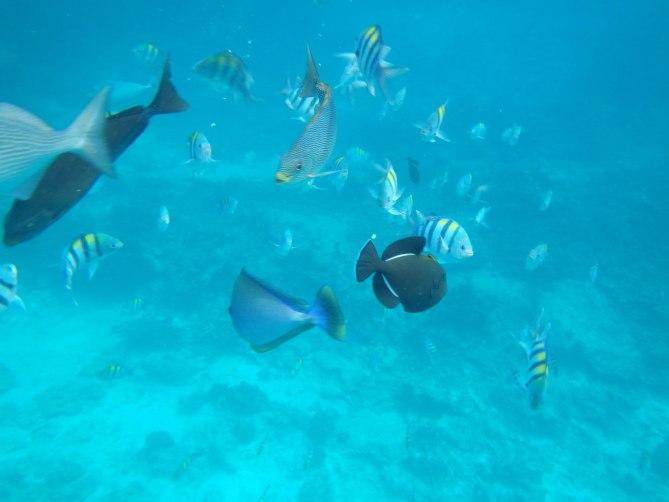 Similan Islands #6