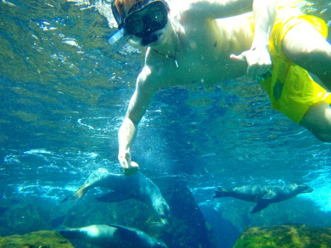 Swimming with Sealions in Galapagos, Ecuador