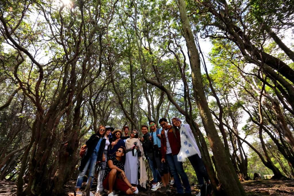 Kawah Putih Forest