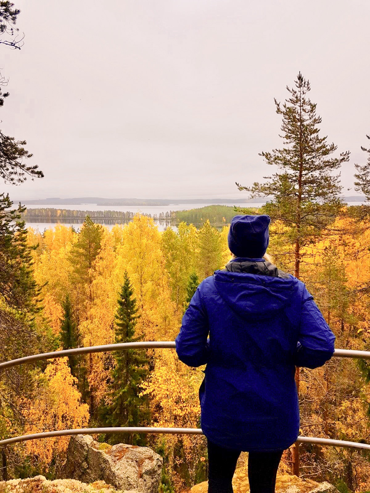 Best time to see fall foliage in Koli is the end of September and the beginning of October