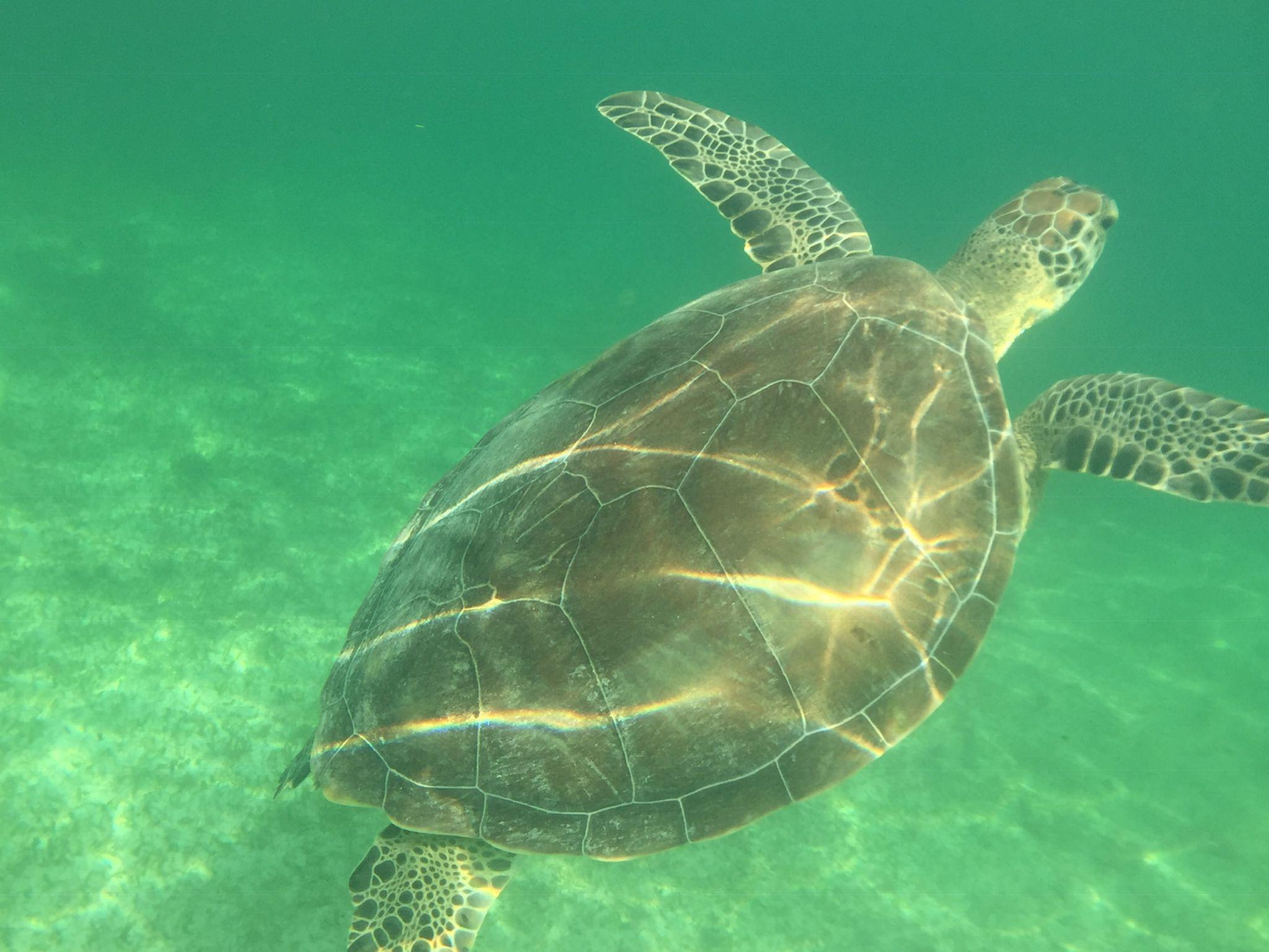 Snorkel with turtles at Akumal Beach