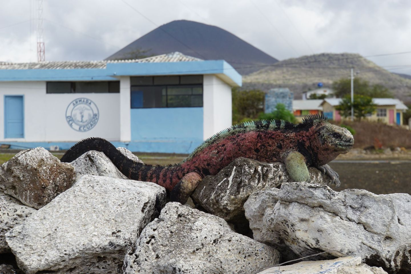 A Marine Iguana on Isla Floreana on the Galápagos islands.