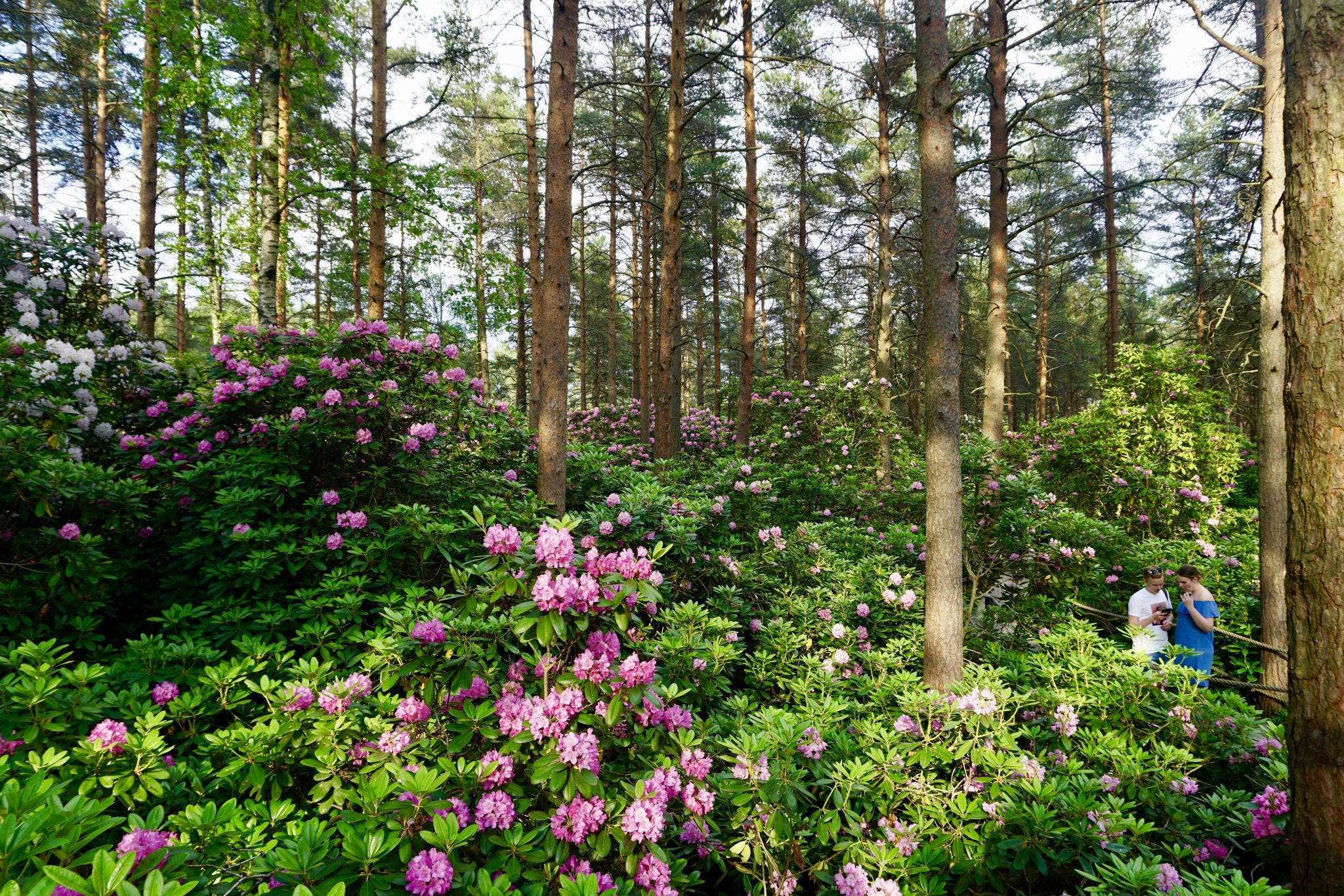 Visiting the Rhododendron Park in Helsinki is a must for all flower enthusiasts