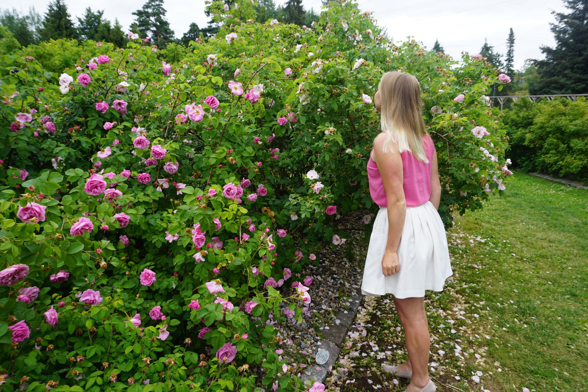 Visiting the Rosarium in Meilahti Arboretum in Helsinki