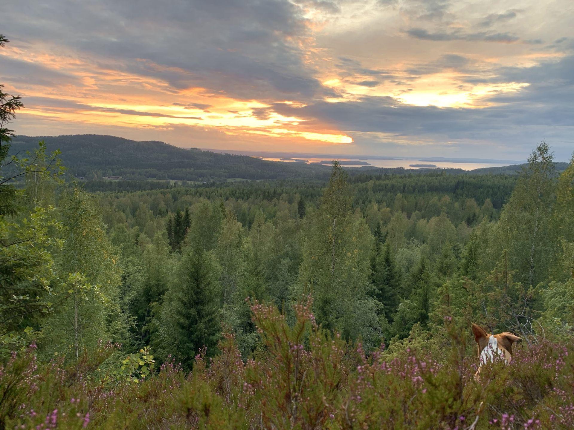 Beautiful sunset in Koli in North Karelia