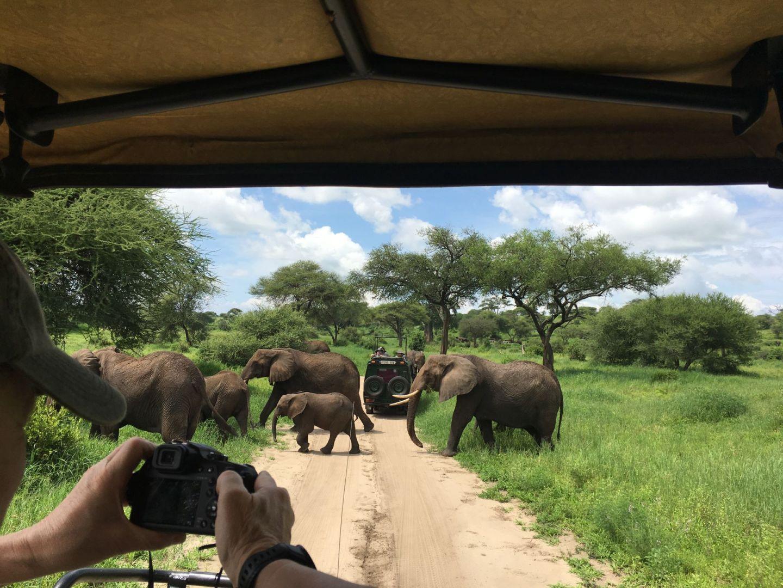Seeing elephants on safari in Tarangire National Park