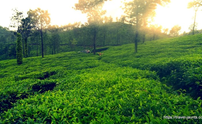 Mornings in a tea estate @ Wayanad