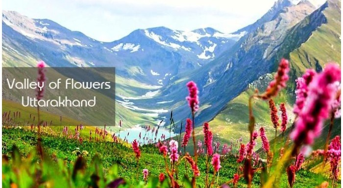 Valley of Flowers: कुदरत ने मानों थाली में सजाकर फूल रख दिए हों