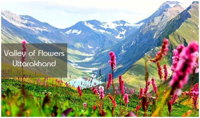 Valley of Flowers National Park Trek, Valley of Flowers, Uttarakhand Tourism Development Board, Valley of Flowers Location, how to reach valley of flowers, valley of flowers season