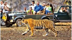 Jim Corbett National Park Full Information Travel Plan