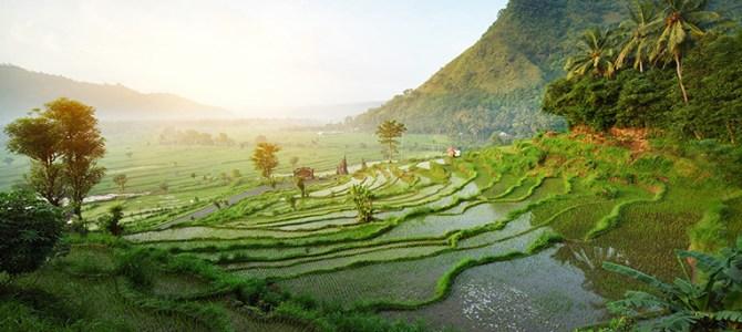 Emirates naar Bali: nu super voordelig!