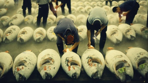 Making a meal of it: The tuna auction at Tsukiji fishmarket in Tokyo.