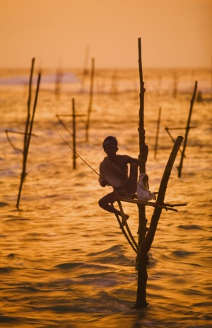 A lone stilt fisherman, Sri lanka.