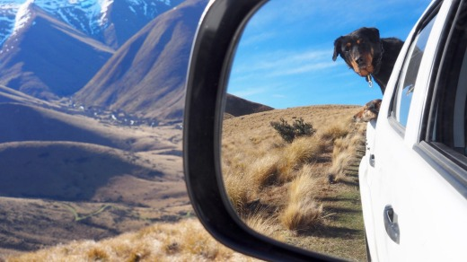 Meet working dog Ben on a farm tour at Skyscape, where you can spend the night along the Alps2Ocean Cycle Trail.
