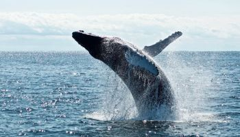 where to go whale watching in Kauai featured image
