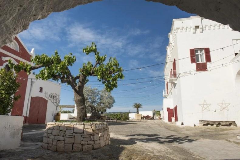 piazza con un albero di ulivo nel centro e costruzioni bianche