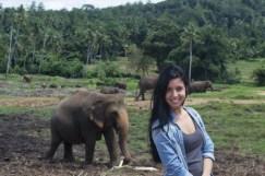 Elefanti Pinnawala5
