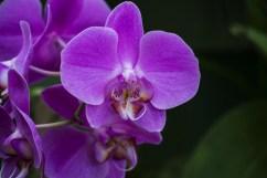 Botanic Garden Kandy8