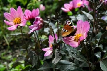 Parco Lazienki fiori