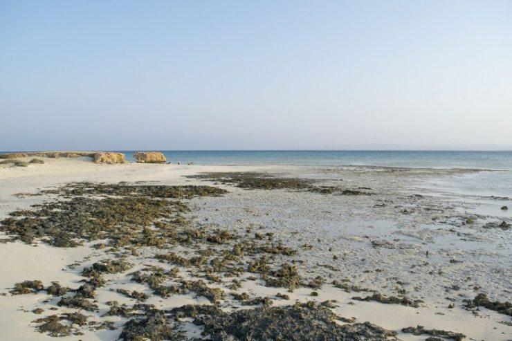 Sharm El Luli 6